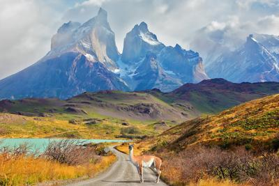 Majestic Peaks of Los Kuernos over Lake Pehoe. on a Dirt Road is worth Guanaco - Lama. the National