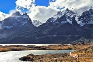 Neverland Patagonia. on Coast of Lake Pehoe Graceful Guanaco . Away in the Clouds - the Cliffs of L by kavram