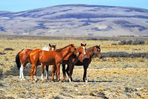 Patagonian Pampas on a Summer Day. the Herd of Wild Mustangs by kavram