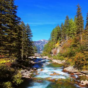 Rapid Mountain Stream of Coniferous Forests. Pastoral in the Alpine Mountain Valley in Austria. Cas by kavram