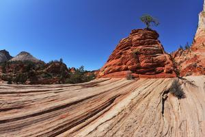 The Famous Jumping Tree Jerky Tree. Picturesque Striped Hills from Sandstone and Low Pines by kavram
