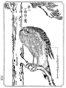A Hawk, 1898 by Kawanabe Kyosai