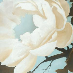 Floral Study by Kc Haxton