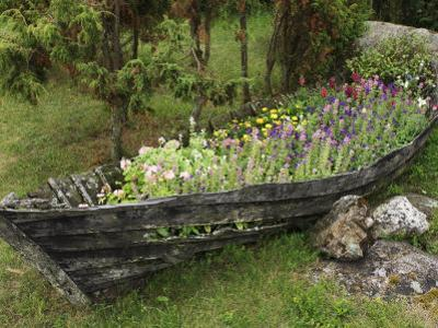 Old Wooden Boat Used as a Flower Planter