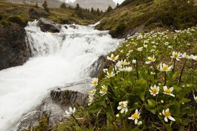 Wildflowers Blooming Next to a Rushing Stream During a Snow Storm by Keith Barraclough