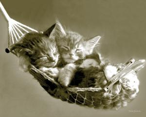 Keith Kimberlin - Kittens in a Hammock