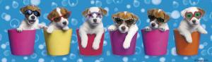 Shady Pups by Keith Kimberlin
