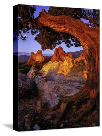 A Juniper Frames South Gateway Rock in Garden of the Gods, Colorado by Keith Ladzinski