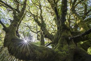 A Moss Covered Tree at Star Fish Point in Washington's Olympic National Park by Keith Ladzinski