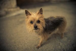 A Terrier Stands on the Street by Keith Ladzinski