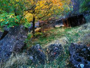 A Tree in Autumn Hues Among Large Boulders in a Small Meadow by Keith Ladzinski