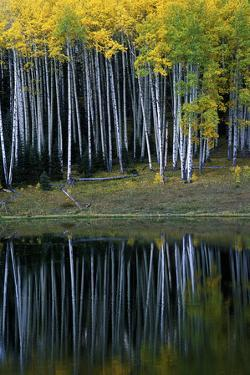 Aspens and their Reflections in Silver Jack Reservoir by Keith Ladzinski