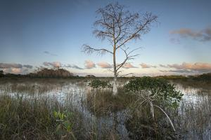 Dwarf Mangrove Trees and Brackish Water in Florida's Everglades National Park by Keith Ladzinski
