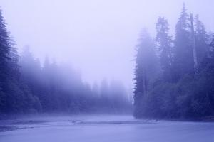 Fog and River in Hoh Rain Forest, Olympic National Park, Washington by Keith Ladzinski