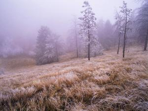 Fog Shrouds a Frost-Covered Forest and Meadow in Pike National Forest, Colorado by Keith Ladzinski