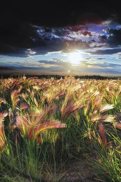 Grasses Blowing in the Wind, South Park, Colorado by Keith Ladzinski