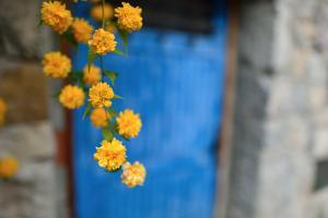Marigolds Hang in Front of the Blue Door of a Stone Building by Keith Ladzinski