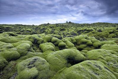 Moss-Covered Lava Field in Vik, Iceland by Keith Ladzinski
