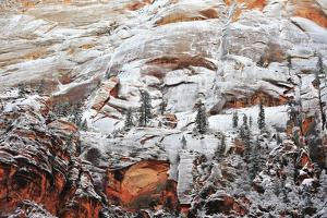 Patches of Snow Clinging to a Rock Face with Evergreen Trees at Sunrise in Zion National Park by Keith Ladzinski