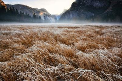 Sunrise over a Frosty Meadow in Yosemite National Park by Keith Ladzinski