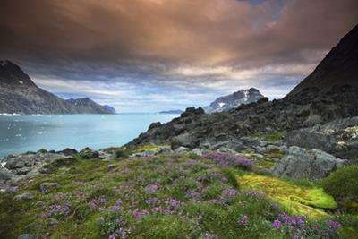 Sunset over a Landscape of Fjords, Mountains, and Wildflowers in Bloom