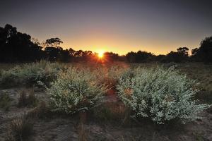 Sunset over Trees and Scrub Vegetation by Keith Ladzinski