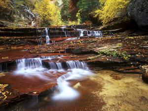View of a Cascading Creek in the Subway Canyon, in Zion National Park, Utah by Keith Ladzinski