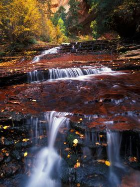 Water Cascades in a Tributary to the Virgin River, in a Pristine Autumn Landscape by Keith Ladzinski
