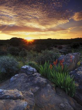 Wildflowers and Sunset at Cederberg Wilderness Area, South Africa by Keith Ladzinski