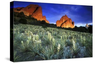 Yuccas Blooming in Garden of the Gods, Colorado by Keith Ladzinski