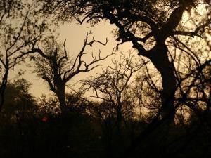 African Landscape - Kruger National Park by Keith Levit