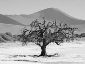 Sand Dunes of Sossusvlei, Namib Desert, Namibia by Keith Levit