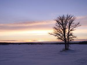 Tree During Sunrise, Gimli, Manitoba by Keith Levit