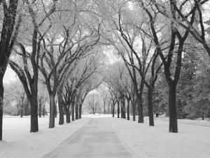 Winnipeg Manitoba, Canada Winter Scenes by Keith Levit