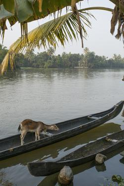 A Goat Waits on a Canoe Until its Owner Returns by Kelley Miller