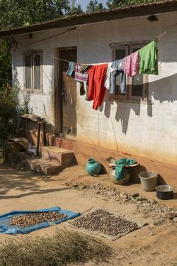 Betel Nuts and Clothes Dry in the Front Yard of a Rural Home by Kelley Miller