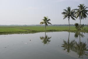 Grass Fields are Just Barely Higher Than the Water Level in the Backwaters by Kelley Miller