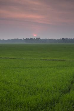 The Sun Sets over a Field in the Backwaters of India by Kelley Miller