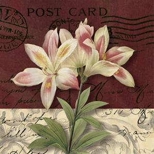 Postcard Lily by Kelly Donovan