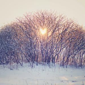 Lovely Sunrise by Kelly Poynter