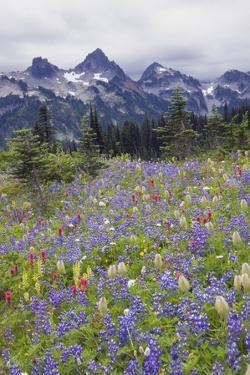 Mount Rainier National Park, Tatoosh Mountains by Ken Archer