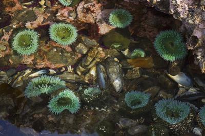 Tide Pool, Salish Sea, Washington State by Ken Archer