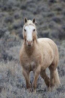 Wild Horse, Steens Mountains by Ken Archer