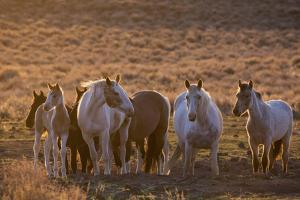 Wild horses at mineral lick by Ken Archer