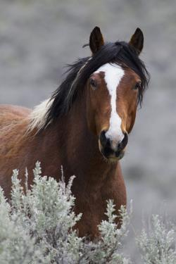 Wild Horses, Steens Mountains by Ken Archer