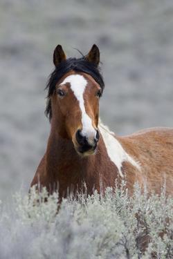 Wild Horses, Steens Mountains by Ken Archer