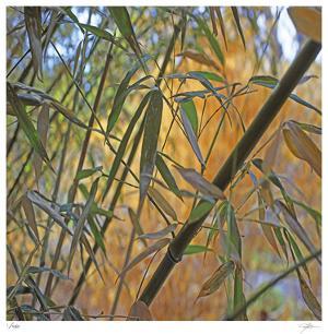 Bamboo by Ken Bremer