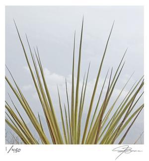 Dagger Yucca by Ken Bremer