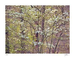 Dogwood 1 by Ken Bremer