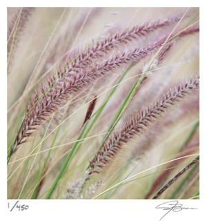 Fountain Grass 7 by Ken Bremer